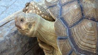 «Горячая линия». Волонтеры нашли нарушения в содержании животных в зоопарке Анапы