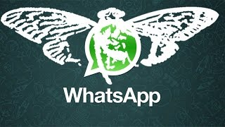 Whatsapp é da Cicada 3301 (CONFIRMED)