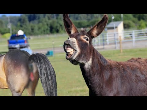 Download Donkey Breed Farm First Time