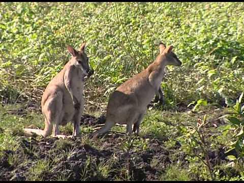 Untamed Australia episode 4 (Documentary)