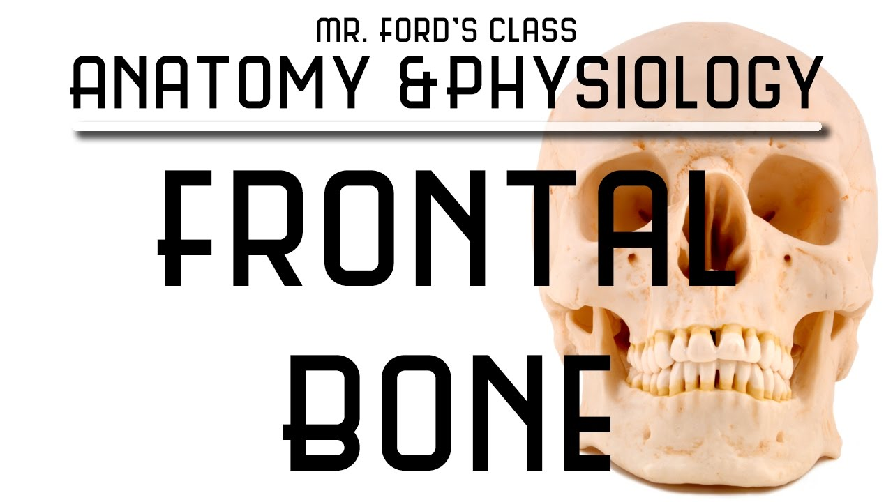 Skeletal System: The Frontal Bone (07:10) - YouTube