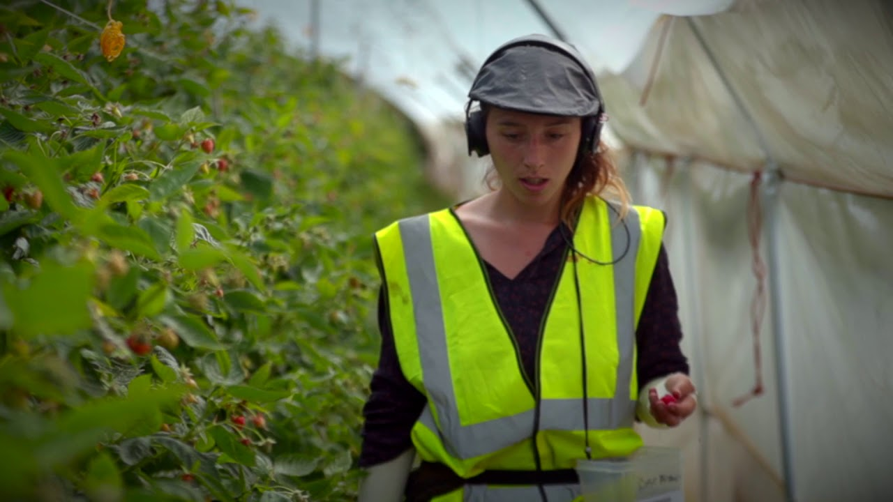 Could you be a fruit picker?