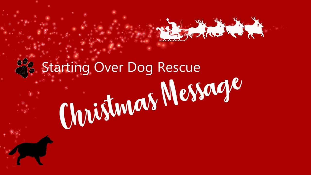 Starting Over Dog Rescue Christmas Message 2020   YouTube