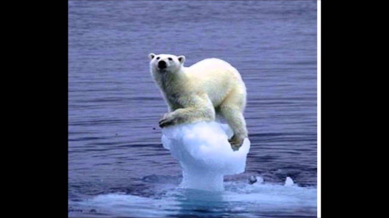 Imagenes De Osos Polares: Osos Polares En Peligro De Extinción Y Koalas -Bay