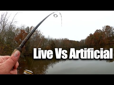 Fishing for Cold Weather Bass - Live Bait VS Artificial Lure