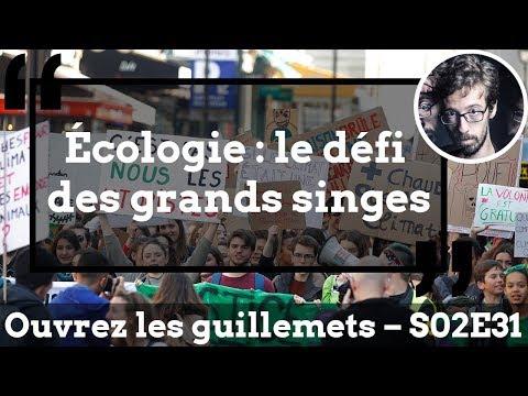 Usul. Écologie : Le Défi Des Grands Singes
