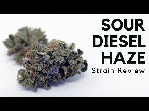 Sour Diesel Haze Cannabis Strain Information & Review