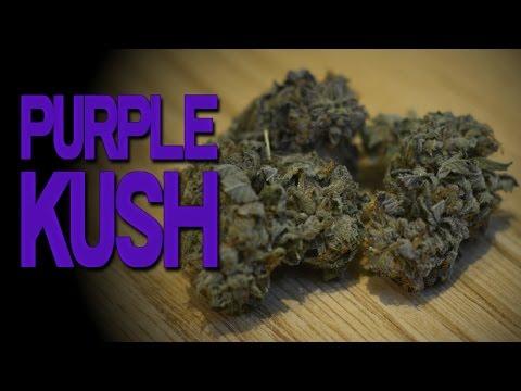 Cannabis Review: Purple Kush