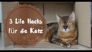 3 Katzen Hacks - Katzen mit Kisten beschäftigen