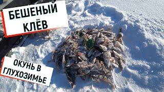 БЕШЕНЫЙ КЛЁВ ОКУНЯ РЫБАЛКА 02 03 2020