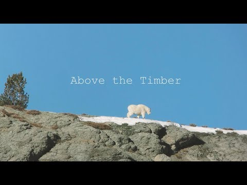 EPIC  Mountain Goat Hunt.......Above The Timber