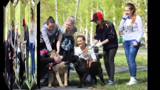 как правильно гулять с собакой социализация