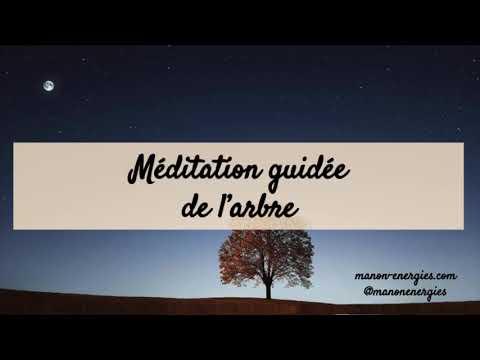 Méditation guidée de l'arbre