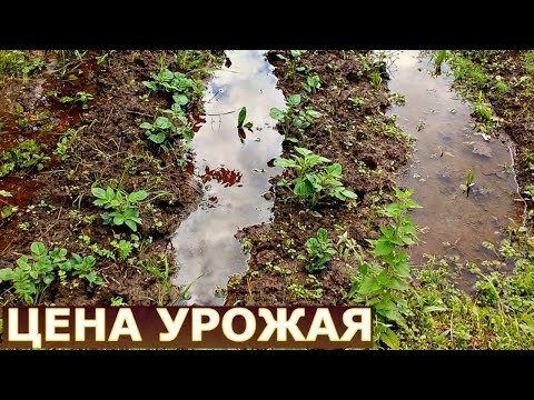 Вопрос: Когда следует копать землю под картофель?