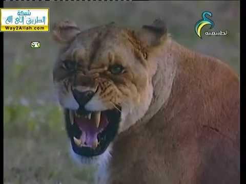 الحياة البرية (الأصوات عند الحيوانات ) :: المجد الطبيعية