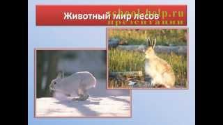 Презентация Животный мир России