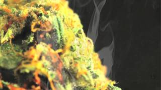 Happy 420 - Official 2012 Weed Anthem - Higher