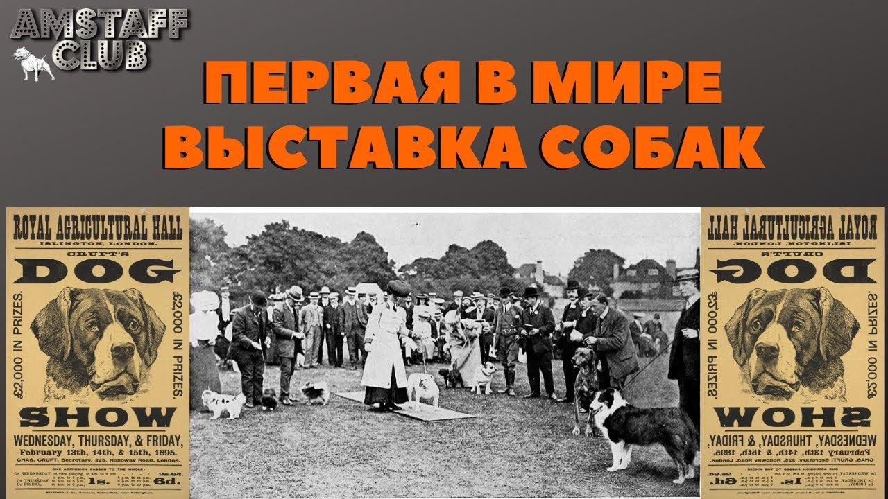 Первая в мире выставка собак. Выставка состоялась в Англии в 1859 году.