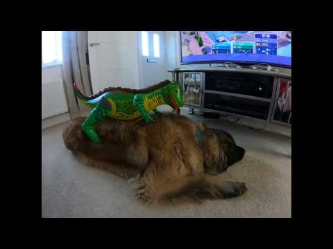 DOG PRANKED BY DINOSAUR | LEONBERGER DOG VS DINOSAUR #FUNNYDOGS #LEONBERGER #DOGVLOGS