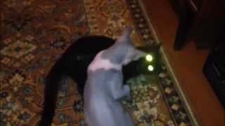 Коты выясняют отношения в стиле Mortal Kombat(, 2014-10-29T18:50:05.000Z)