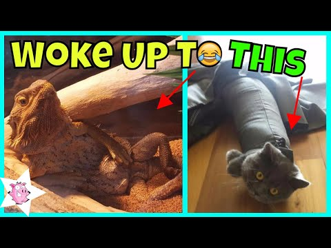 The Funniest 'I WOKE UP TO THIS' Moments That Have Ever Happened To Pet Owners