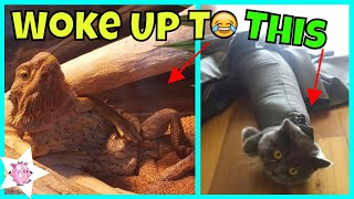 """The Funniest """"I WOKE UP TO THIS"""" Moments That Have Ever Happened To Pet Owners"""