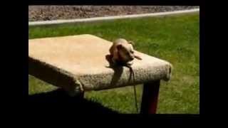 Dog Agility Project