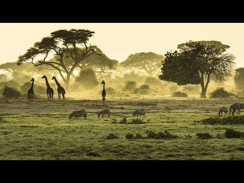 Safari in East Africa - Kenya and Tanzania