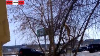 Голая, грязная и страшная дамочка на дереве  Real Video