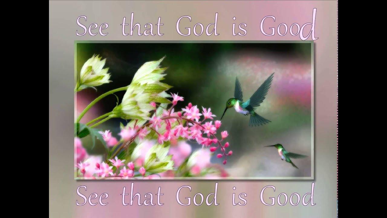 free screensaver hummingbirds youtube