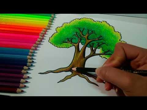 How to draw tree | วาดต้นไม้ง่ายๆ ระบายสีต้นไม้ง่ายๆ ด้วยสีไม้