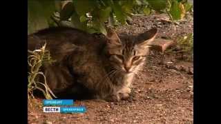 В Оренбурге появился убийца кошек