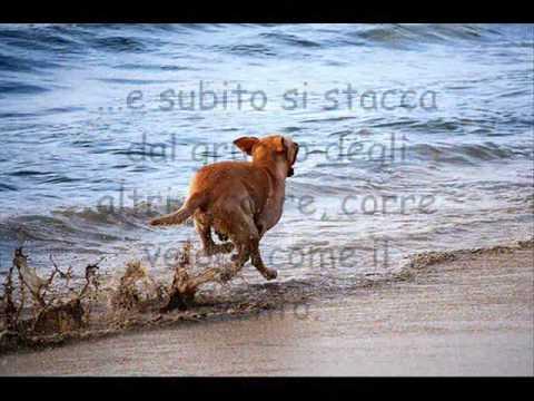 Quando Il Nostro Amico Ci Lascia Ti Presento Il Cane