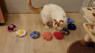 고양이 방을 예쁘게 꾸며주고 싶은 집사의 마음^^ 수세…