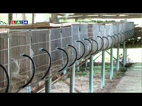 Nông nghiệp thời hội nhập: Mô hình nuôi thỏ theo hướng công nghiệp | LATV