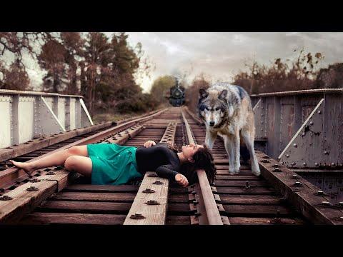 Волк мощным ударом столкнул женщину с рельс, отплатив за своё спасение