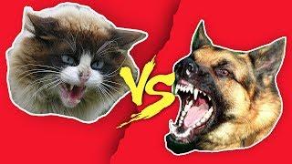 видео Предки кошек