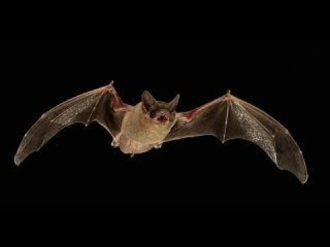 Sunset Outflight of the Bats @ Orient Mine Land Trust, Villa Grove, CO