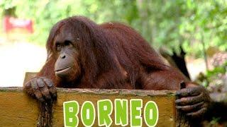 Остров Борнео видео о релакс отдыхе. (о.Калимантан Малайзия)(Видео о природе Борнео. Рай для эко-туризма. Природа джунглей, тропический дождь, животные и растения остров..., 2014-07-28T16:44:42.000Z)