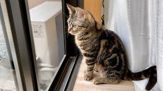 猫が家出を決意しました