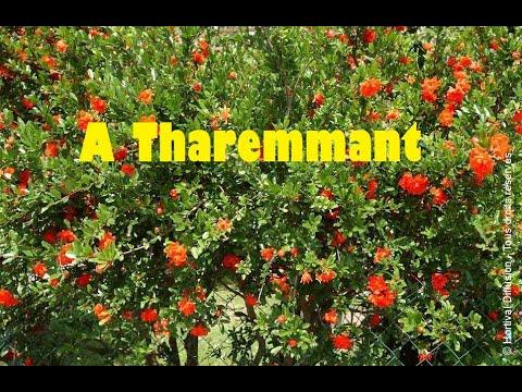 A Tharemmant Akli