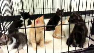 Kittens at the Adoption Center