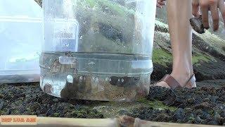 Ngày hè : Phần 7 :Câu cá bống biển và bắt được cả cua tôm biển