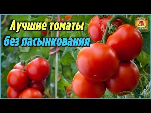 Самые лучшие сорта томатов без пасынкования для теплиц и открытого грунта. Описания и характеристики | пасынкования | низкорослые | открытого | помидоры | подвязки | теплицы | томаты | лучшие | грунта | самые
