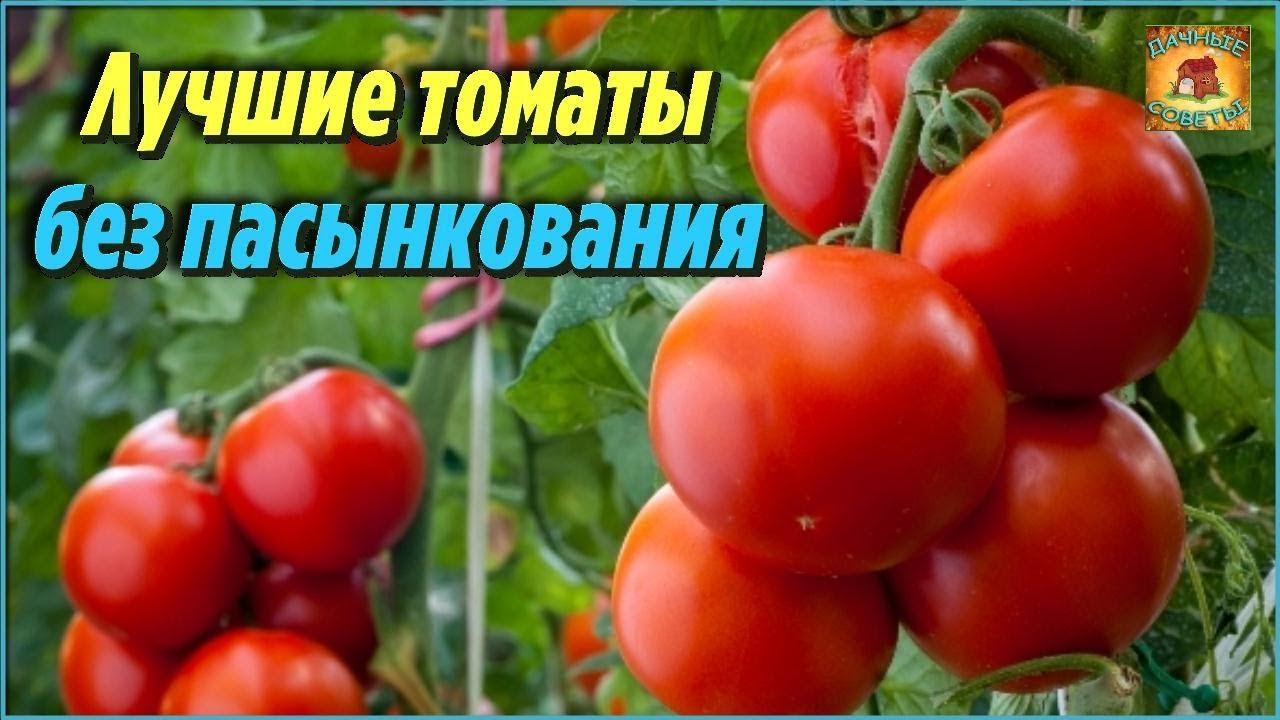 самые лучшие томаты черри для теплиц