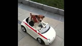 Mr.Monty driving Fiat 600