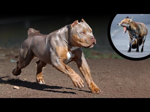 These 10 Dog Breeds Are Really Predators