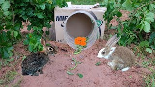 Amazing Quick Rabbit Trap Using Case Electric Fan Guard - Easy Best Rabbit Traps Work 100%