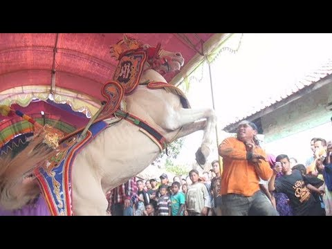 Seni Sunda Kuda Renggong KUDA PENCA, Pertarungan Kuda vs Manusia...