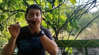 Артикуляция на губной гармошке  Урок #60. How to play  on the harmonica